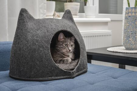 Cat is lying in the small house, cat condo made from grey felt (wool ) in living room.