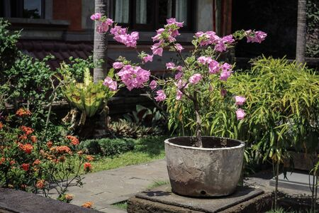 Pot With Flowers for garden decoration on Bali island