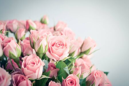 Bouquet of pink roses in a white vase on blue background closeup