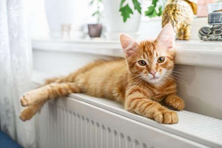 Cute little ginger kitten with amber eyes relaxing on the warm radiator closeup Standard-Bild
