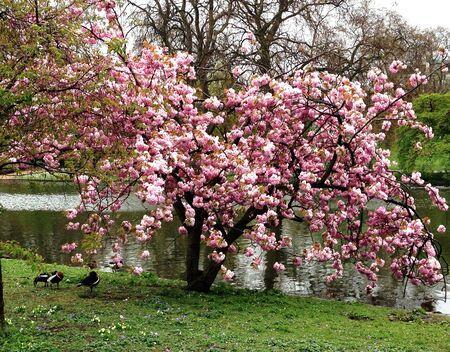 hyde: Spring in hyde park, London