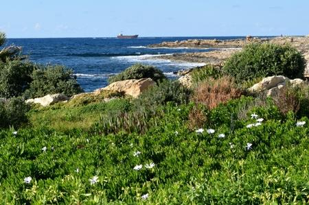 Green seashore, old stranded ship in Pathos, Cyprus Stock Photo