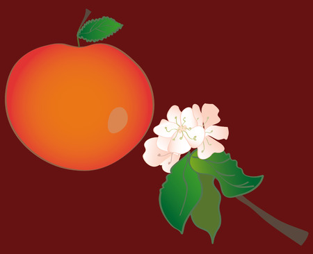 Apple and apple flowers on the dark background Vector