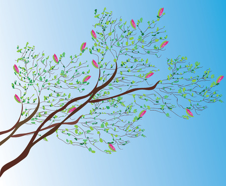 magnolia tree: Magnolia tree background in spring