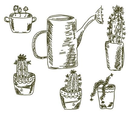 Cactus doodle florist set sketch Vector