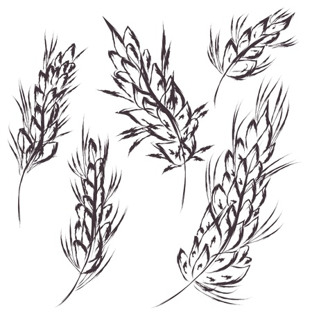 Wheat symbol sketch artistic vector