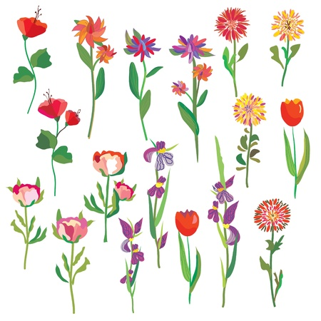 Flowers set in bright colors Vector