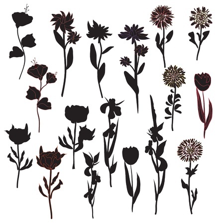 tree peony: Flowers silhoette set in black Illustration