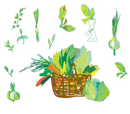 Vegetables and greens set with basket hand drawn Stock Vector - 18949255