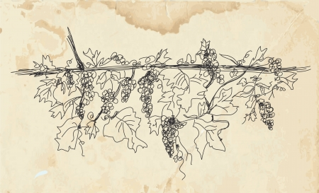 Grape wine banner on the paper texture