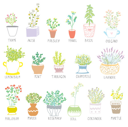 herb garden: Herbs and spices set in pots with flowers illustration Illustration