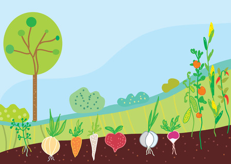 root vegetables: Garden in spring with vegetables background Illustration