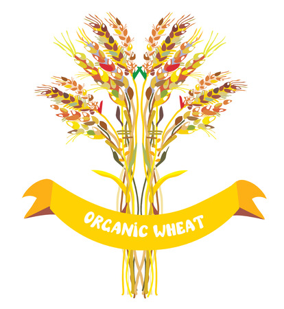 Label design for organic wheat with frame Vector