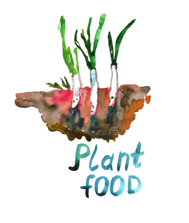 ecological: Plant food - agriculture and ecological illustration watercolor Illustration