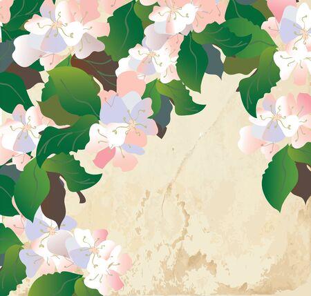 apple blossom: Apple blossom card with paper texture - retro design Illustration