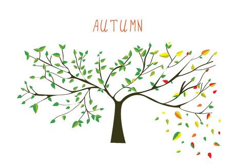 tree branch: Autumn is coning tree - vector illustration Illustration