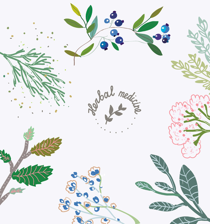herbal background: Herbal background for the organic medicine. illlustration with hand drawn design and frame.