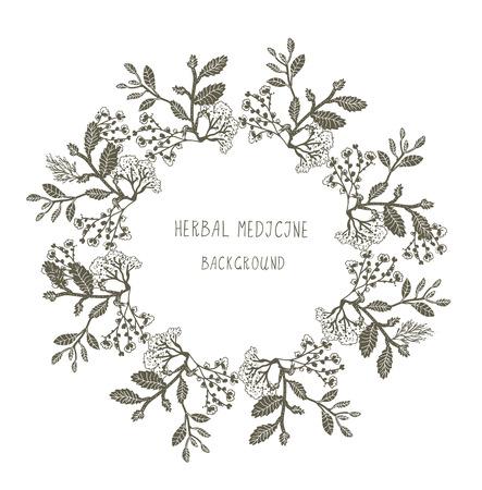 salvia: Herbal medicine label or frame, sketchy design with plants. Vector graphic illustration.