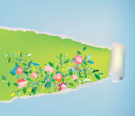 paper graphic: Paper scroll background with flowers - abstract frame graphic illustration