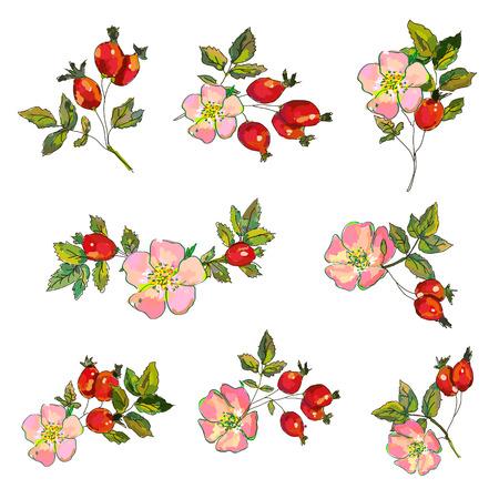 Hagebutten-Set mit Blumen und Beeren für Tee- oder Medizinillustration. Vektorgrafik