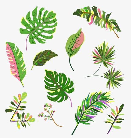 Tropical leaves set with bright hand drawn design. Vector graphic illustration