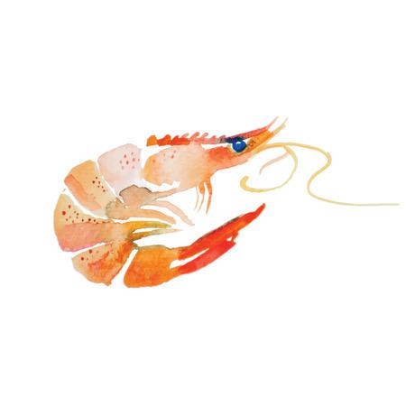 Watercolor shrimp. Sea food fresh. Handmade painting.