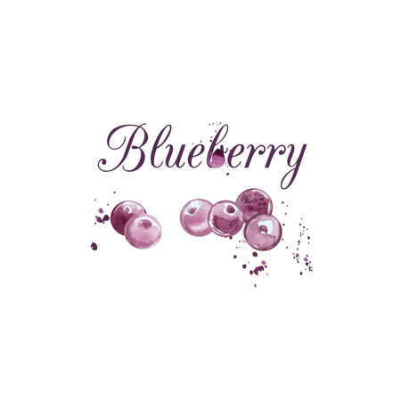blueberry: Watercolor Blueberry illustration in vector.