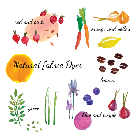 Natural fabric dyeing. Traditional cotton and silk dyeing from plants and vegetables. Vector illustration. 일러스트