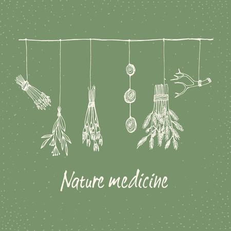 손 건조 허브와 식물 벡터 환으로 그린 그림. 자연 의학입니다.