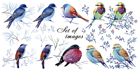 Set of gouache birds on a branches. Natural cliparts for wedding design, artistic creation.