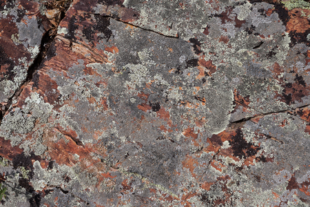 black and silver: Multicolored red brown black silver grey rock stone moss texture background
