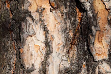 Lärchenrinde Hintergrund. Lärchenrinde Textur. Baumrinde Hintergrund. Bark Hintergrund. Bark Textur. Baumrinde Textur Standard-Bild
