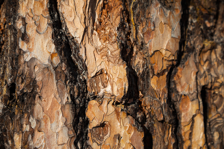 larch: Larch bark background. Red larch bark background. Larch bark texture. Tree bark background. Bark background. Bark texture. Tree bark texture