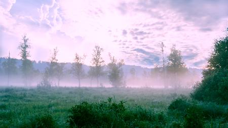 reveille: Beautiful landscape with dawn mist and morning dew. Summer idyllic beautiful landscape.