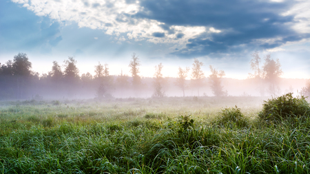 reveille: Beautiful landscape with dawn mist and morning dew. Summer idyllic beautiful landscape. Selective focus. Stock Photo