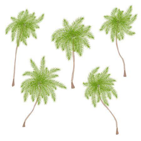 Set of stylized cartoon style palm trees isolated on the white background.