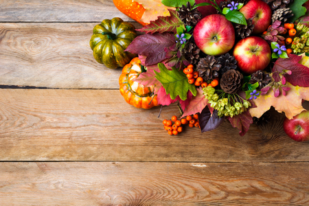 Thanksgiving or fall greeting background with ripe apples, rowan berries, green seeds, cones, blue flowers, pumpkins, leaves, copy space