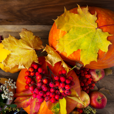 Harvest concept with two pumpkins, rowan berries and yellow maple leaves, top view Stock Photo
