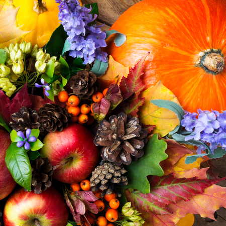 Ripe red apples, cones, leaves, seeds and blue flowers, top view. Thanksgiving or fall greeting background