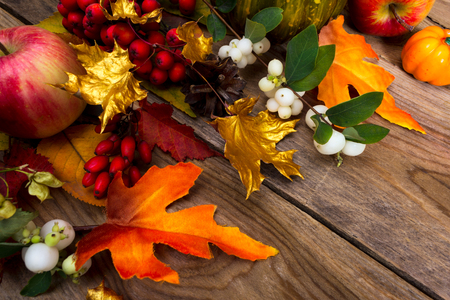 Thanksgiving greeting background with apples, golden maple leaves, rowan and white berries on the rustic wooden table Stock Photo