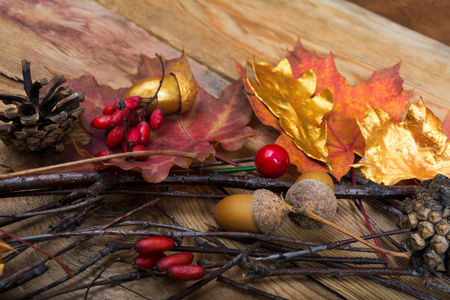 Fall or Thanksgiving background with acorns, red berries, golden and colorful maple leaves on the wooden table