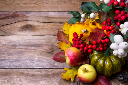 Fall harvest background with snowberry and rowan berries, pumpkin, apples, cones and yellow squash, copy space