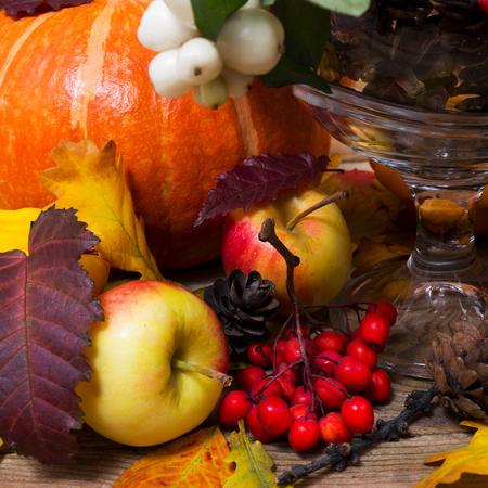 Thanksgiving or fall background with snowberry and rowan, pumpkin, apples, cones