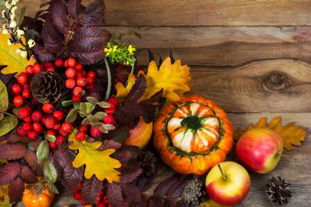 Thanksgiving background with rowan berries, cones, apples, pumpkins, rowan and oak leaves on the rustic wooden table, copy space