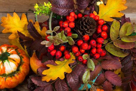 Thanksgiving decoration with pumpkin, cones, red rowan berries, yellow flowers and oak leaves, top view