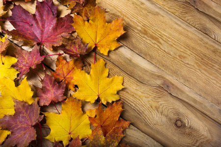Fall rustic greeting background with yellow and red magenta maple leaves, copy space Stockfoto