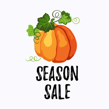 Season sale sticker vector design with orange ripe pumpkin, green leaves and stems on the white background. Illustration