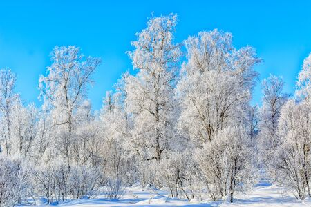 Beautiful winter day landscape with blue sky and white frozen trees