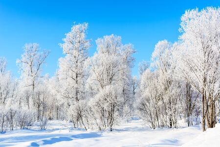 Winter day landscape with white frozen trees and blue sky