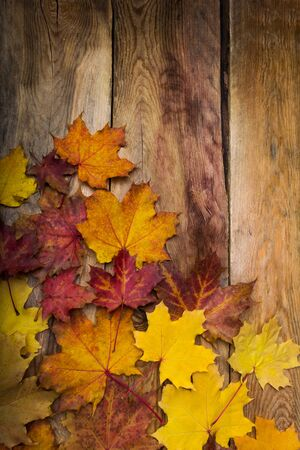 Fall yellow, orange and red magenta maple leaves on the rustic wooden table, copy space Stockfoto